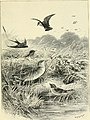 Birds of the wave and woodland. Illustrated by Charles Whymper and others (1894) (14747683594).jpg
