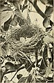 Birds that every child should know (1907) (20376832032).jpg