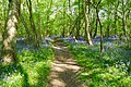Bisham Woods (26891476270).jpg