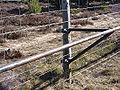 Bisons clôtureMargerideFrance.jpg