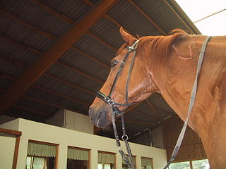 Bitless bridle Type of horse equipment that is worn on the head and has no parts in the mouth that is used to direct the horse