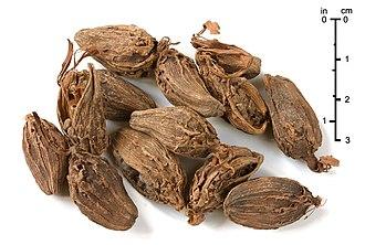 Black cardamom - Black cardamom fruit as used as spice
