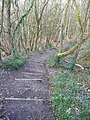 Blackdown Hills , Steps near Wellington Monument - geograph.org.uk - 1243954.jpg