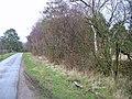 Bleatarn wood - geograph.org.uk - 367328.jpg