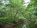 Bloomfield Provincial Park IMG 8216 (1849028602).jpg