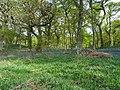 Bluebell Woods (2).jpg