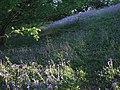 Bluebells near Carswells Moor - geograph.org.uk - 422301.jpg