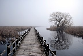 Boardwalk in Pelee.JPG