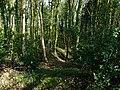 Boarhuts Copse - geograph.org.uk - 1273986.jpg