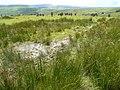 Bog near Cefn Golau - geograph.org.uk - 526740.jpg