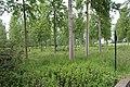 Bois Fasses St Cyr Menthon 1.jpg
