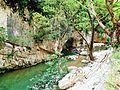 Bosco di Frasassi Ancona fiume 1.JPG