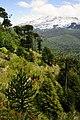Bosque primario 06.jpg