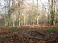 Botley Woods - geograph.org.uk - 89661.jpg