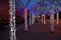 Brampton City Hall Christmas lights (3053953501).jpg