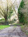 Bridleway, Athelhampton - geograph.org.uk - 1176651.jpg