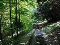 Bridleway in Ashford Hanger - geograph.org.uk - 955785.jpg