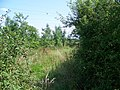Bridleway near Minety - geograph.org.uk - 1449958.jpg
