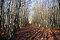Bridleway through Hurst Wood - geograph.org.uk - 1570648.jpg