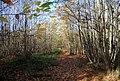 Bridleway through Hurst Wood - geograph.org.uk - 1570696.jpg