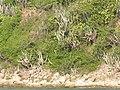 British Virgin Islands - panoramio (1).jpg