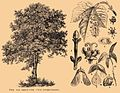 Brockhaus and Efron Encyclopedic Dictionary b35 186-1 cropped.jpg