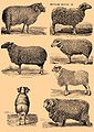 Brockhaus and Efron Encyclopedic Dictionary b42 686-0.jpg