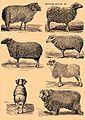 Brockhaus and Efron Encyclopedic Dictionary b42 686-0.jpg