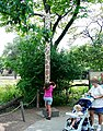Brookfield zoo fg04.jpg