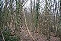 Brown's Wood - geograph.org.uk - 1759227.jpg