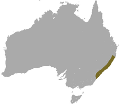 Brown Antechinus area.png