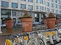 Brussels gardening - panoramio.jpg