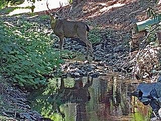 Permanente Creek
