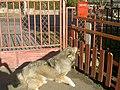 Bundás, a kutya 2.jpg