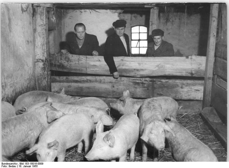 Bundesarchiv Bild 183-18016-0009, Ablieferung in der LPG Bunsrade-Kr. Schwerin