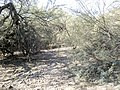 Butcher Jones Trail - Mt. Pinter Loop Trail, Saguaro Lake - panoramio (144).jpg