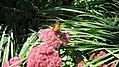 Butterfly (8476328282).jpg