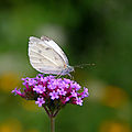 Butterfly - Butterfly Place in Westford, Massachusetts (2).jpg