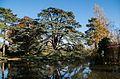 Cèdre du Liban au Jardin du Trocadéro du Parc de Saint-Cloud.jpg
