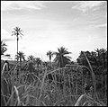 CH-NB - Belgisch-Kongo, bei Thysville (Mbanza Ngungu)- Landschaft - Annemarie Schwarzenbach - SLA-Schwarzenbach-A-5-26-056.jpg