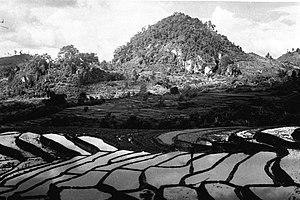 Sindanglaya - Rice terraces near Sindanglaya (1900-1940)