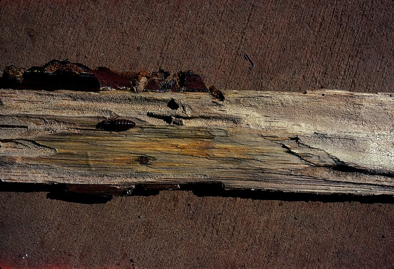Insect damaged wood image