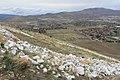 C Hill Trail , Carson City - panoramio (38).jpg