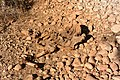 Cadaver on Dishon River.JPG