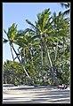 Cairns Clifton Beach Beach Shadows 2011-4 (6288251176).jpg
