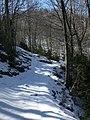 Camí cap al Puigsacalm (març 2011) - panoramio (2).jpg