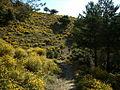 Camino a Busquístar entre pinos y bolinas (12859275035).jpg