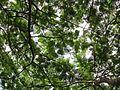Canopy (7374364690).jpg