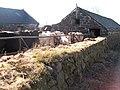 Cattle at Tyddyn-y-felin - geograph.org.uk - 1766402.jpg