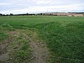 Cattle over there - geograph.org.uk - 2116987.jpg